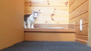ふわふわな床とねこ2。-Fluffy floor and Cats.-