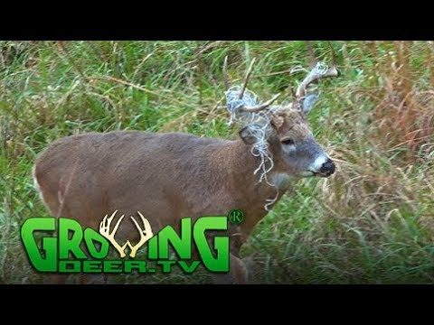 Deer Hunting: Tips for a Hang and Hunt (#416) @GrowingDeer.t