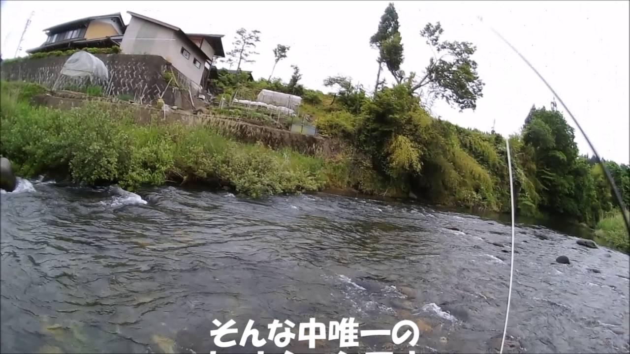 2016年6月5日飛騨高山丹生川、小...