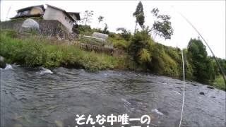 2016年6月5日飛騨高山丹生川、小八賀川釣行