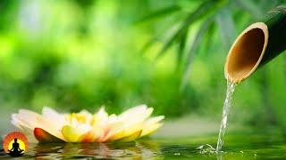 Relaxing Music 24/7, Boost Positive Energy 528Hz, Meditation, Healing, Zen, Sleep, Spa, Study