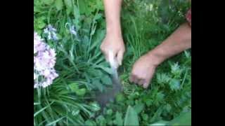Sauzahn.wmv (Jäten, Gartenwerkzeug)