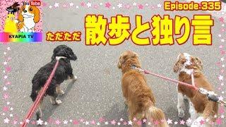 特にオチもなく、ただただ緩い動画です。 ・おもしろ可愛い犬・アンポン...