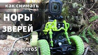 Как снимать видео животных / GoPro и НОРА / REAL animals