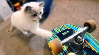 KITTEN LEARNS TO SKATEBOARD!