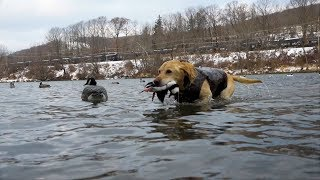 Allegheny River Ducks & Geese | Cabela's Northern Flight