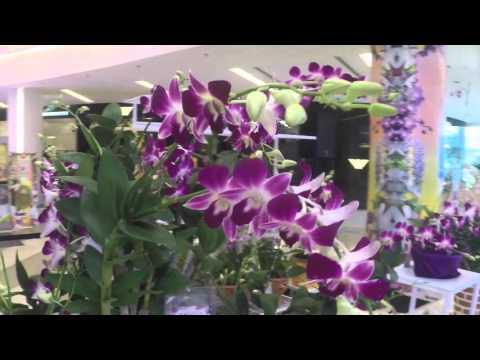 Thailand's Orchid: Aerides crassifolia