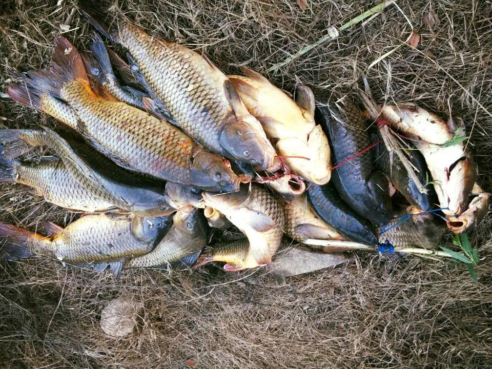 San diego fishing group 8 lake hodges for Fishing license san diego