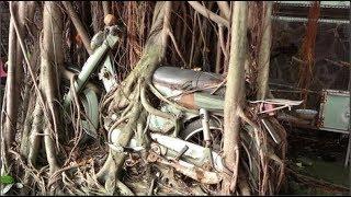 Chuyện lạ Việt Nam - Cây cổ thụ ôm chặt cứng chiếc xe máy suốt 25 năm ở Bình Dương