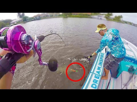 Florida Inshore Fishing For GIANT Snook Caught On Big NEON Lure