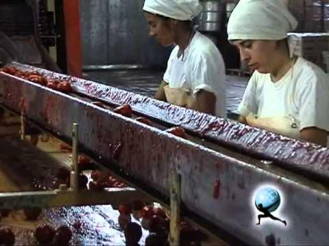 Proceso de Producción del tomate en lata