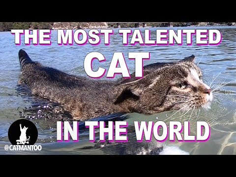 The Most Talented Cat in the WORLD lives in Australia (Compilation)