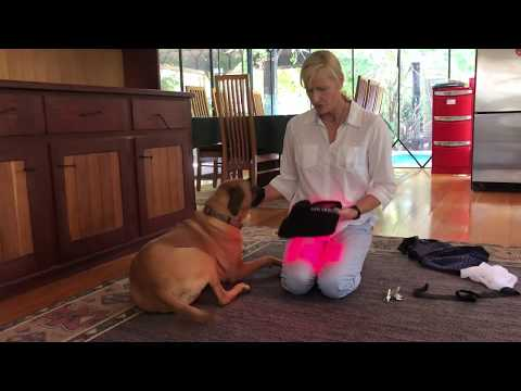 How to use the Red/Infrared Light Therapy Wrap for Dogs