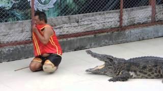 Шоу крокодилов на о. Пхукет