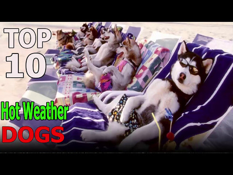Top 10 Hot Weather dog breeds | Top 10 animals