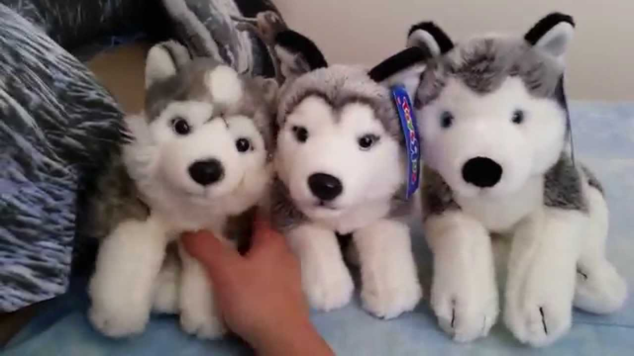 Animal Alley Husky Plush Review Youtube