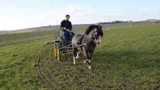poney welsh attelage
