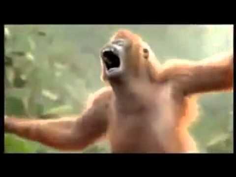 Monyet Galau Version Cita Citata