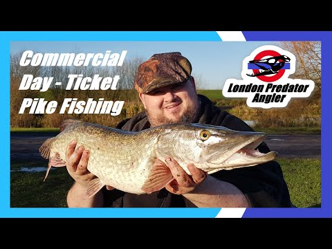 Commercial Day Ticket Pike Fishing - London Predator Angler