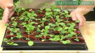 How To Plant Out Small Plug Plants