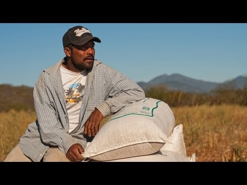 Organic Vegan Sesame Seeds | Oaxaca's Community Farming