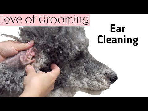 How To Clean a Dog's Ear