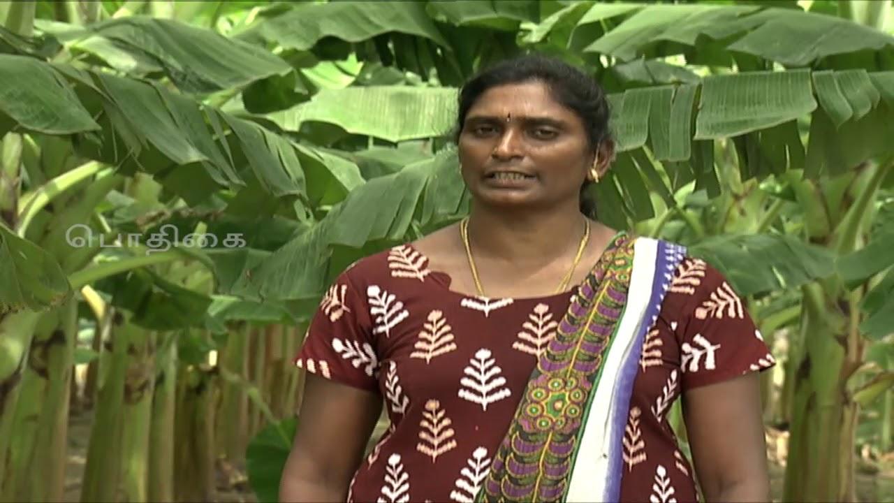 Download Pon Vilaiyum Bhoomi (12/11/2018) (மாத்தியோசிச்சேங்க ) Nendran Banana Cultivation