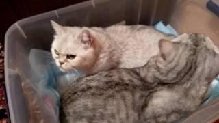 Схватки кошки  и Помощь!