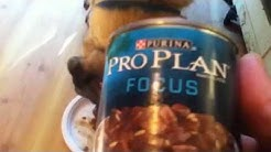 Purina Vs Pedigree Canned Dog Food