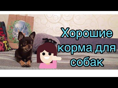 Хорошие марки кормов для собак | Обзор сухих кормов