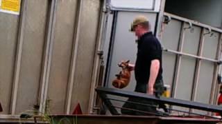 Fox Cubs Investigation