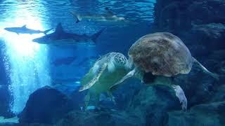코엑스 다정한 바다거북