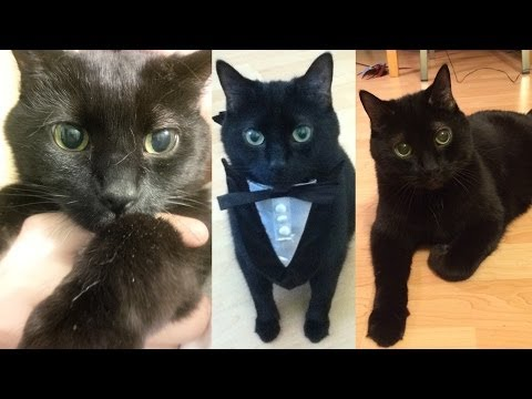 N2 the Talking Cat has passed away
