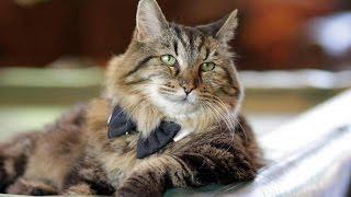 Самому старому коту в мире исполнилось 26 лет | КИТ