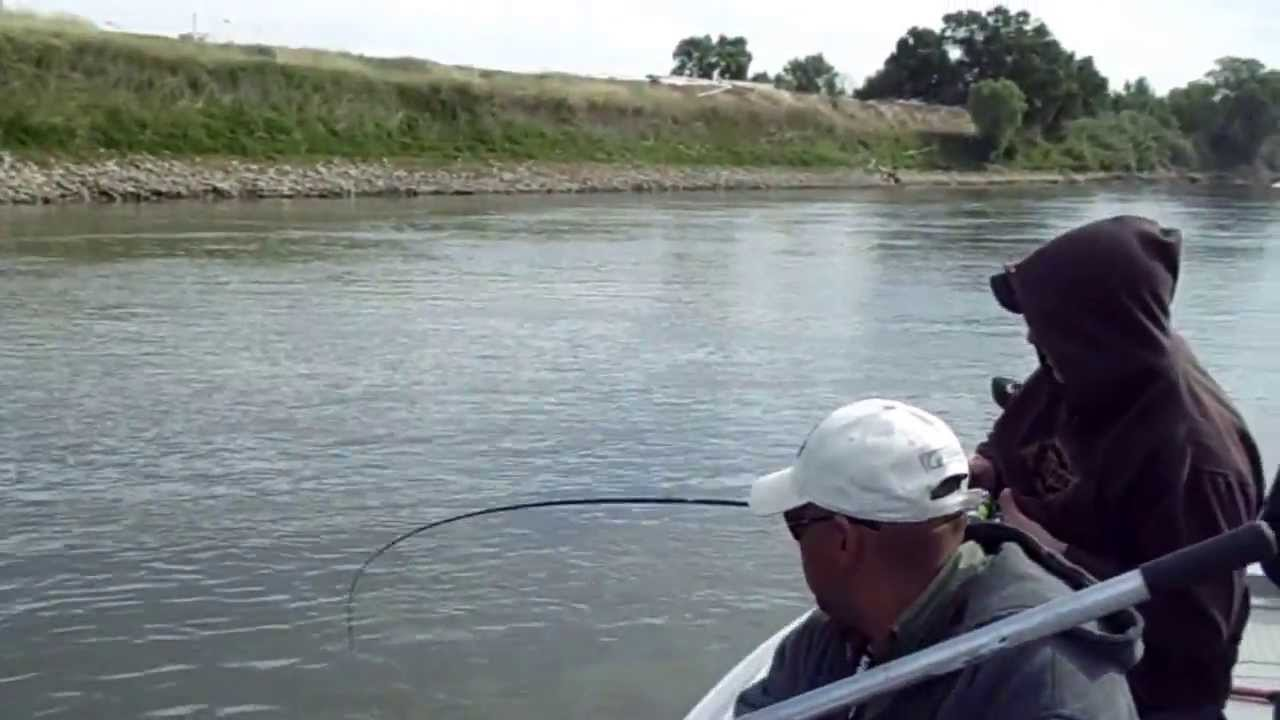 Live Bait fishing for Stripers on the Sacramento River