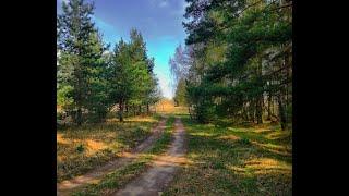 Автопутешествия на природу в лес  Смоленской области.