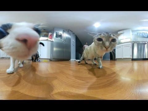5 Cute Cats VR  (360 video)