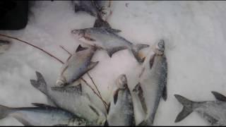 Зимняя рыбалка на АХТУБЕ. п. СОКРУТОВКА