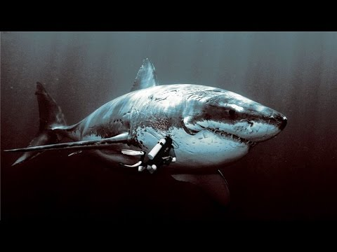 Top 10 Biggest Sharks Ever Existed Youtube