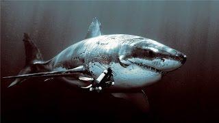 10 BIGGEST SHARK EVER EXISTED