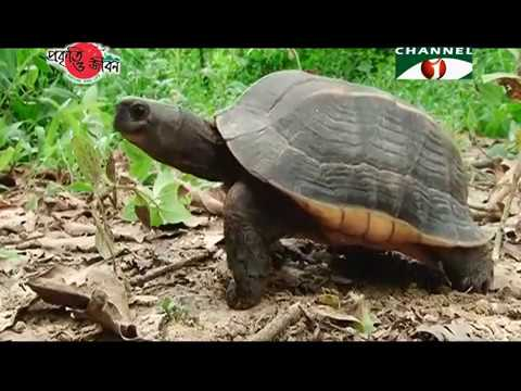 Nature and Life - Episode 245 (Turtle Conservation)