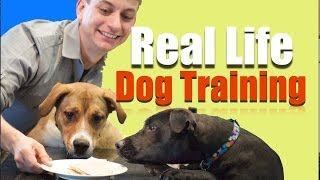 Behind The Scenes Of The Dog Training Revolution!