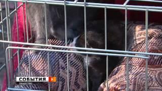 """Приют для бездомных животных """"Твои Друзья"""", г. Самара"""