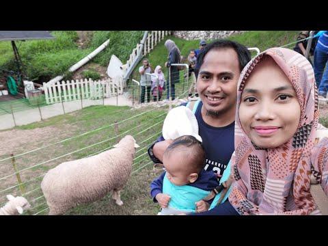 the-sheep-sanctuary,-cameron-highlands,-pahang,-malaysia,-tempat-wisata