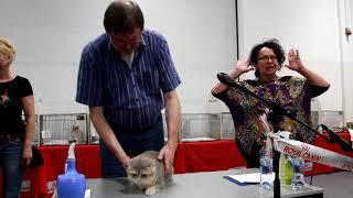 видео Всемирная выставка кошек