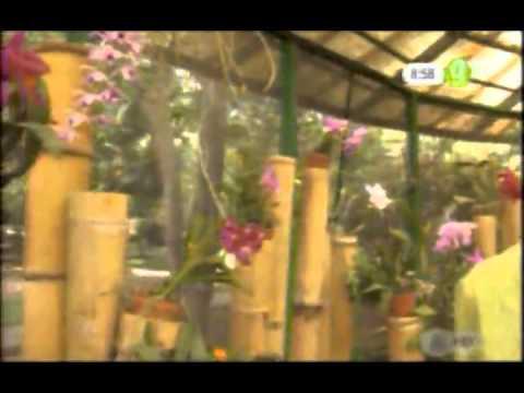 Visite el jard n bot nico de orqu deas youtube for Jardines de orquideas