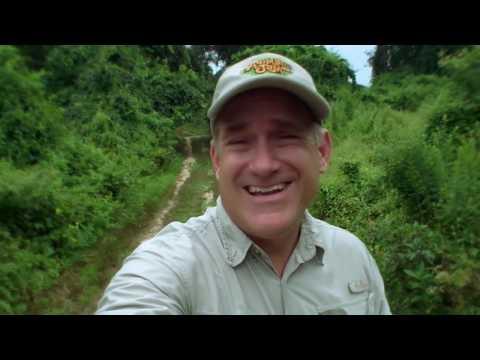 Animal Jam - Ask Brady: How Do Bats Navigate?