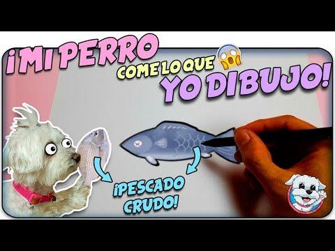 Mi PERRO Come lo que sea que YO DIBUJE! ✏️🍔Whatever You Draw, I'll eat 🐶Anima Dogs
