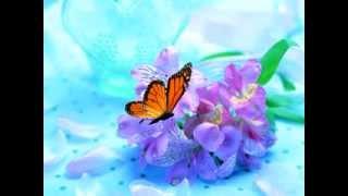 фон,анимация - пархающая бабочка