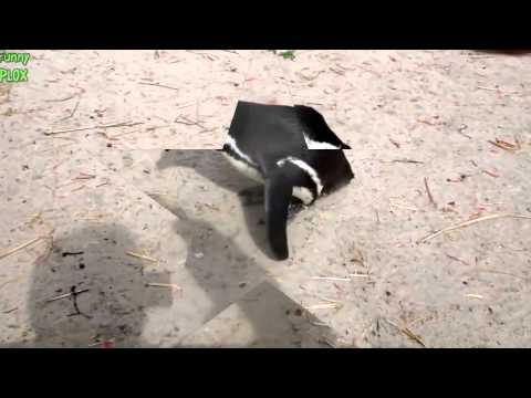 Funny Videos-Top 10 Funny Penguins